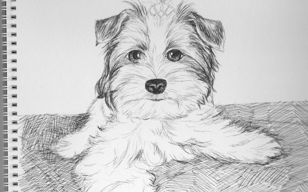 Doggy Portrait Drawings