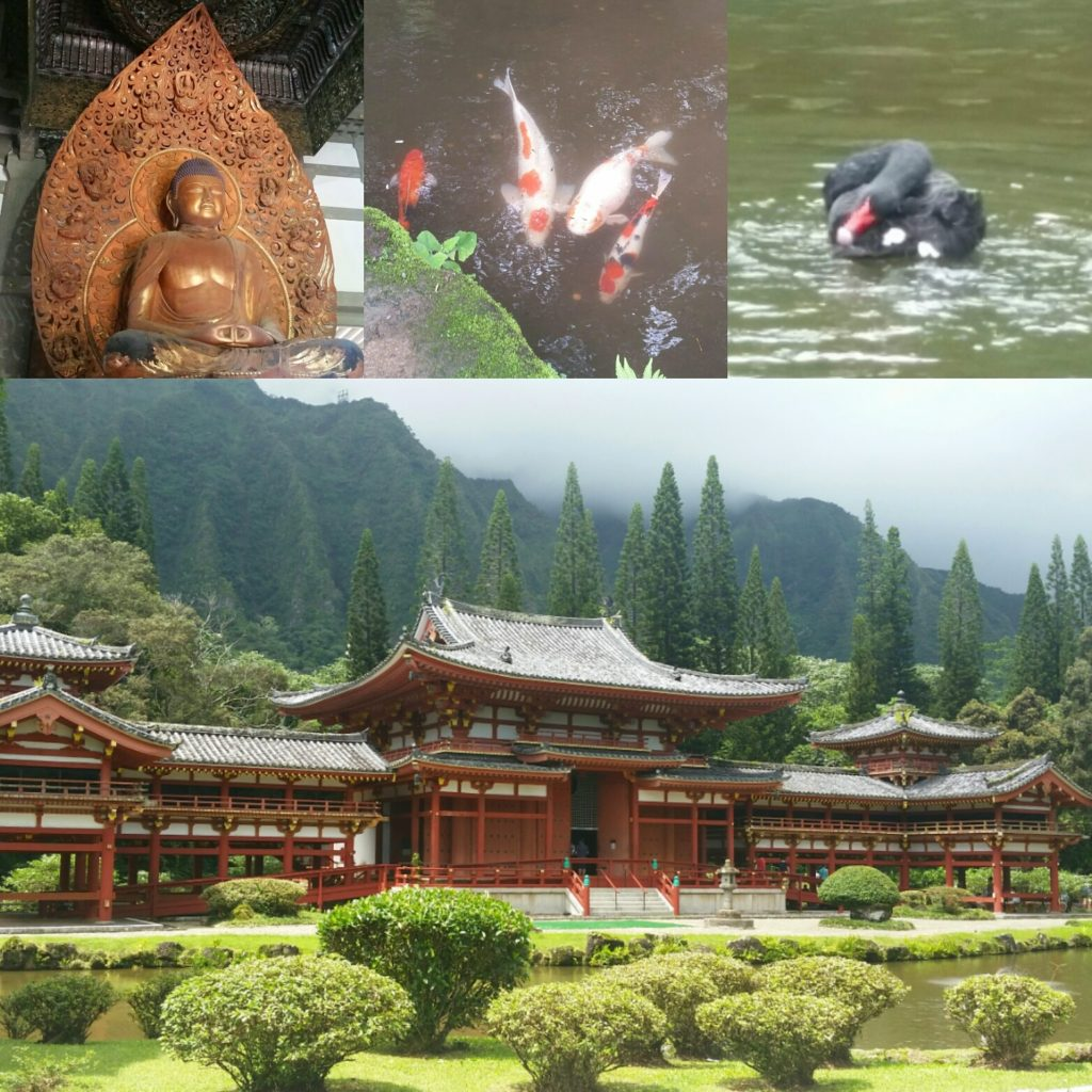 Beautiful and peaceful Byodo-In Temple. The koi kind of freak me out because there are so many of them, but the black swans are so striking