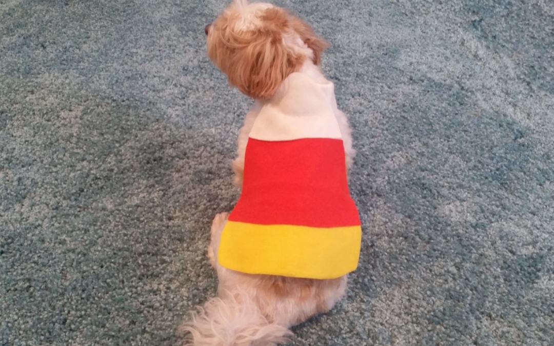 EASY DIY Pet Costume – Candy Corn